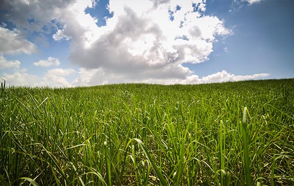 Sugarcane-farming
